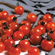 Sweet Million Hybrid Cherry Tomato Seeds Alternate Image 1