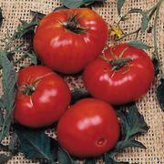 Brandywine Tomato Seeds Alternate Image 1