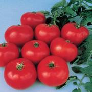 Brandywine Tomato Seeds image
