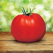 Park's Whopper CR Improved Hybrid Tomato Seeds Pack of 250 image