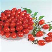 Sugary Tomato Seeds image