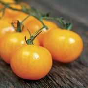 Golden Gem Hybrid Tomato Seeds Image