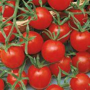 Ladybug Hybrid Cherry Tomato Seeds Alternate Image 1