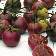 Chocolate Cherry Tomato Seeds Alternate Image 1