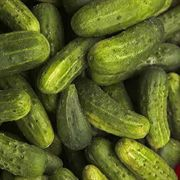 National Pickling Cucumber Seeds image