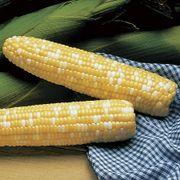 Serendipity Triplesweet™ Hybrid Corn Seeds (P)Pkt of 200 seeds image