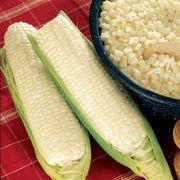 Silver King Hybrid Corn Seeds (M)1/4lb image
