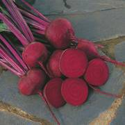Red Ace Hybrid Beet Seeds Alternate Image 1