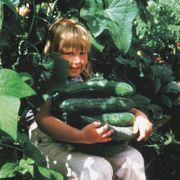 Sweet Success Hybrid Cucumber Seeds Alternate Image 1