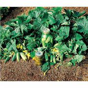 Bush Pickle Hybrid Cucumber Seeds image