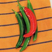 Garden Salsa Hybrid Pepper Seeds