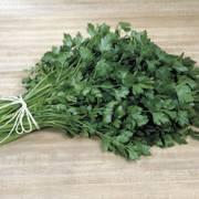 Italian Plain Leaf Parsley Seeds image