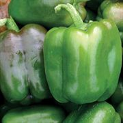 Candy Bell Hybrid Pepper Seeds image