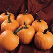 Hijinks Hybrid Pumpkin Seeds Alternate Image 1