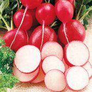Cherriette Hybrid Radish Seeds Alternate Image 1