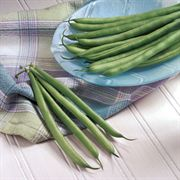 Nash Bean Seeds image