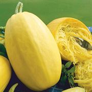 Vegetable Spaghetti Squash Seeds - Organic