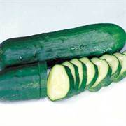 Marketmore Select Organic Cucumber Seeds image