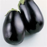 Black Beauty Organic Eggplant Seeds Alternate Image 1