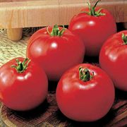 MoneyMaker Organic Tomato Seeds Image