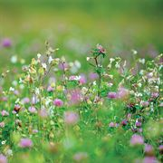 Park's Organic Cover Crop Seeds image