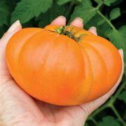 Kellogg's Breakfast Organic Tomato Seeds image