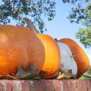 Fall Rainbow Blend Organic Pumpkin Seeds