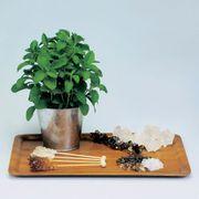 Sugarleaf Organic Stevia Seeds Alternate Image 3