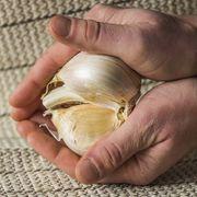 Elephant Garlic Thumb