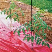High Yield Red Tomato Mulch Fabric