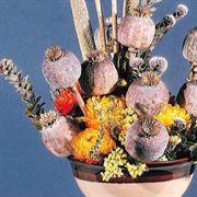 Florists Poppy Seeds