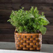 Mixed Herb Garden in Honey & Chocolate Basket