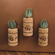 Succulent Plant in Magnetic Wine Cork - Set of 3 Alternate Image 1