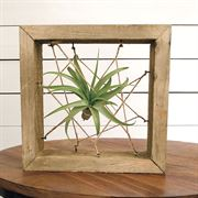 ToTilly Floating Air Plant Alternate Image 1