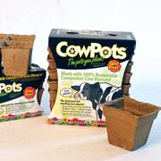 Cow Pots (4 inch square; pack of 12)