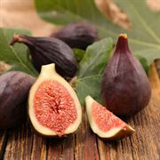 Violet de Bordeaux Fig