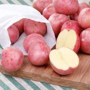 Colorado Rose Potato