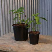 Black Nursery Pot-Gallon & Quart Combo PK (Gal-10pk, Qt-24pk)
