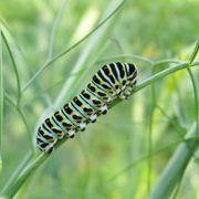Monarch Butterfly Habitat Alternate Image 2