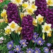 Spring Perfume Blend image