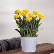 Vibrant Wish Bulb Garden Thumb
