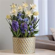 May Flowers Bulb Garden image