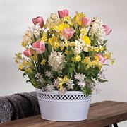 Blooming Beauty Bulb Garden image