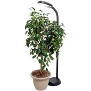 Hydrofarm Agrobrite Standing LED Plant Lamp
