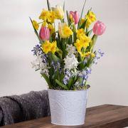 Spring Awakening Bulb Garden Thumb