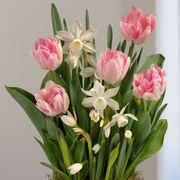 Spring Kiss Bulb Garden Alternate Image 1
