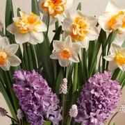 Spring Fling Bulb Garden Alternate Image 1