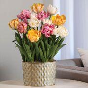 Tulip Triumph Bulb Garden Thumb