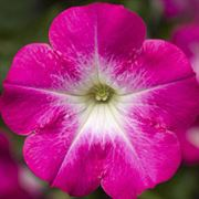 Blooming Block Kwik Kombos™ Chloe's™ Alternate Image 2