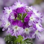 Blooming Block Kwik Kombos™ Spring Showers™ Alternate Image 3
